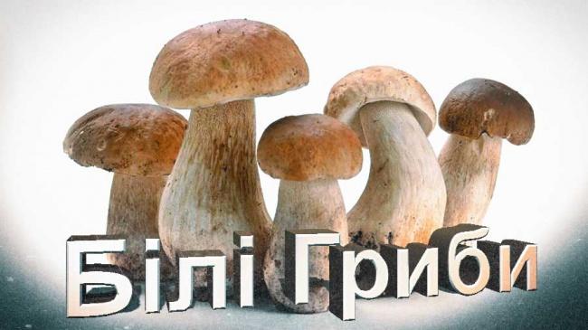 Як правильно солити білі гриби на зиму